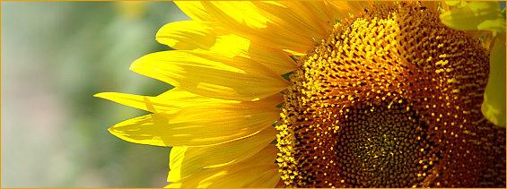 Sunflower Counselling & Wellness